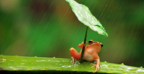 Bạn là con ếch như thế nào?